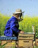 20年后中国蜂农会是什么样?