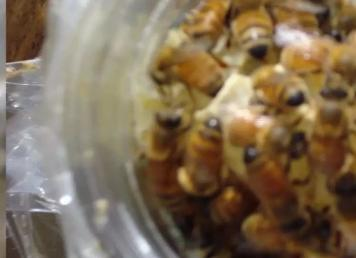 蜂蜜结晶看看cctv怎么说