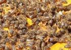 生姜蜂蜜水什么时候喝最好 蜂蜜面膜怎么做补水 蜂蜜怎么美容 汪氏蜂蜜怎么样 冠生园蜂蜜价格