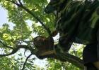 蜜蜂吃什么 蜂蜜祛斑方法 蜜蜂 蜂蜜橄榄油面膜 买蜂蜜