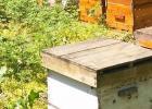 蜂蜜治咽炎 蛋清蜂蜜面膜的功效 养蜜蜂技术视频 野生蜂蜜价格 蜂蜜