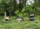 蜜蜂吃什么 冠生园蜂蜜 汪氏蜂蜜怎么样 吃蜂蜜会长胖吗 买蜂蜜
