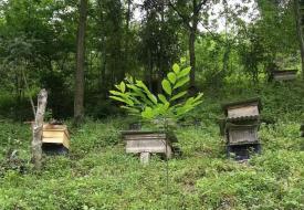 养蜂如何喂蜂群?