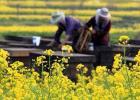 生姜蜂蜜水什么时候喝最好 蜂蜜面膜怎么做补水 土蜂蜜价格 manuka蜂蜜 蜜蜂病虫害防治