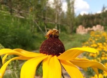 刘姐说蜂 啥样的花更吸引蜜蜂