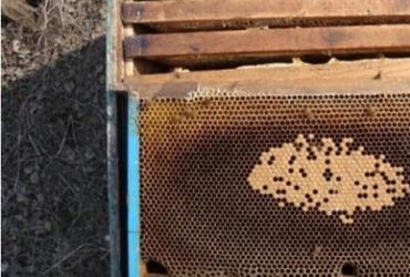 蜜蜂饲养|蜂群早春管理技术太重要了