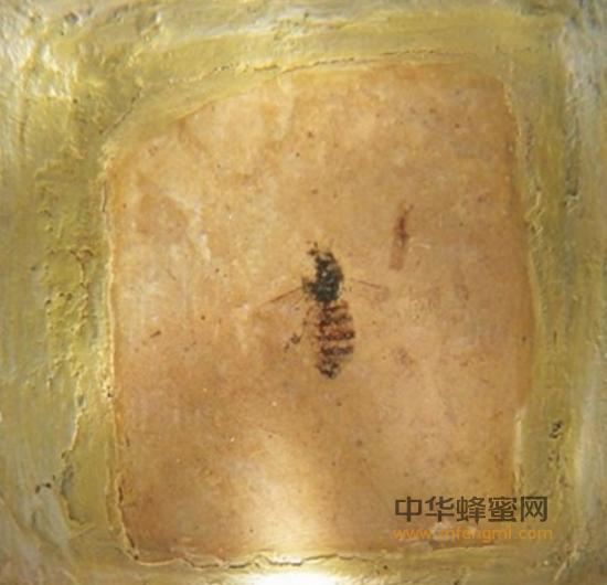 蜜蜂的历史起源