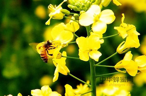 我国的养蜂业历史悠久