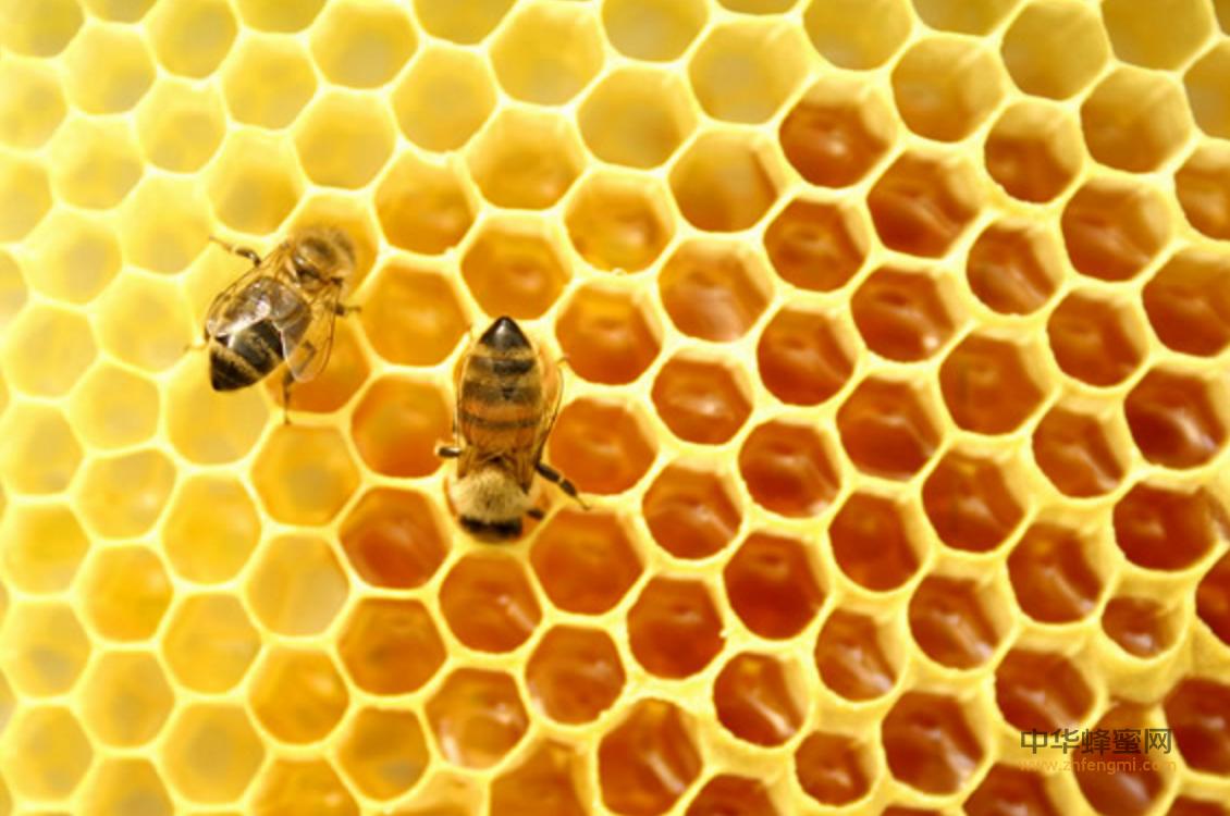 蜜蜂 养蜂 蜜蜂养殖技术 蜂巢分类 工蜂房 王台 雄峰房