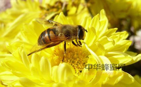 蜜蜂 蜜蜂的记忆 地球磁场 地磁周期 养蜜蜂 养蜂技术