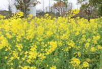 蜜蜂授粉对植物意义重大