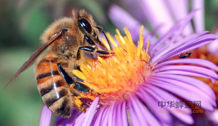 水资源 环境 蜂场选址 养蜂技术 蜜蜂养殖