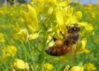 蜂场环境 气候 养蜂技术 蜜蜂养殖