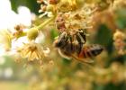 蜂场环境 交通 通信 蜜蜂养殖 养蜂技术