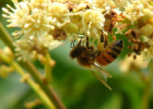 蜂场规划 蜂场布置 养蜂作业区 包装区 办公区 生活区 展示区