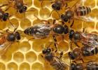 养蜂 养蜂技术 蜂群检查 蜜蜂养殖 养蜜蜂 养蜂方法 怎么养蜂