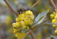 蜜蜂春季饲养技术之速查应急补救