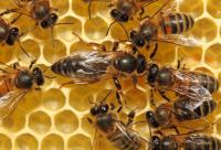 蜂群的健康检查