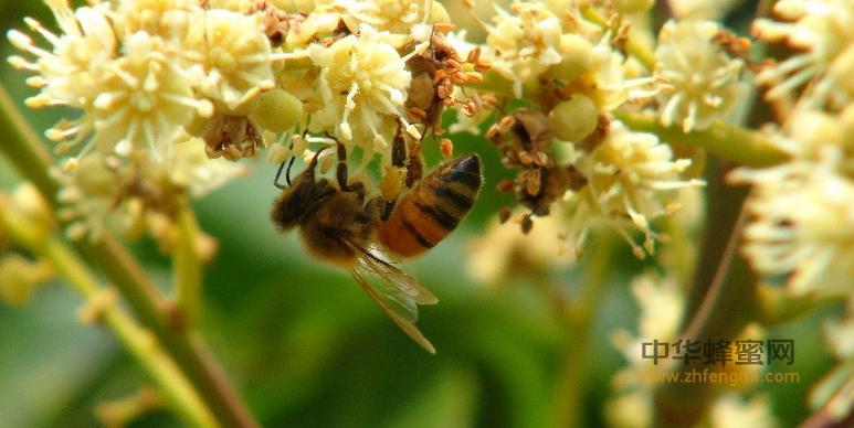 木本类蜜粉源植物与区域花期