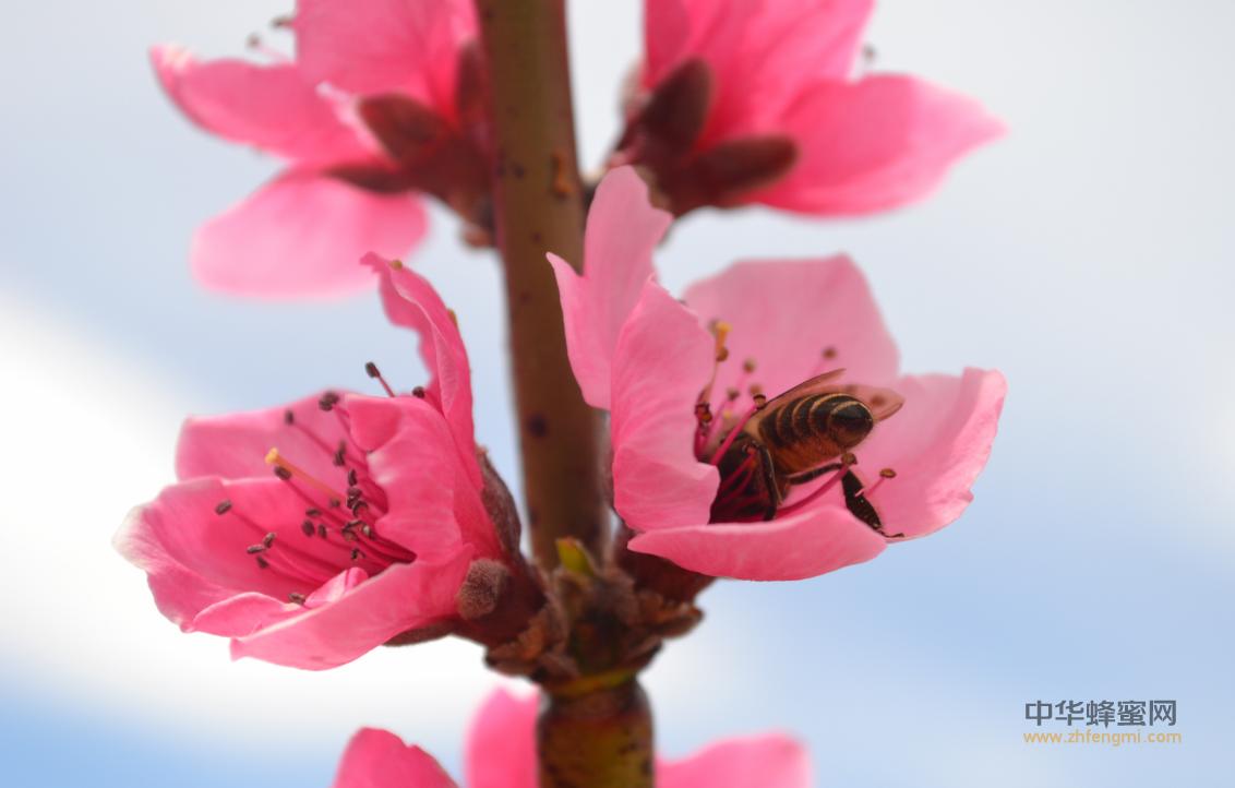甘肃省 地方 标准 蜂蜜 纯蜂蜜 蜂蜜标准 有机蜂产品