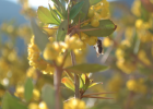 养蜂 养蜂技术 灾害规避 防灾 养蜜蜂 养蜂方法 怎么养蜂