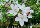 蜂产品 生态环境 养蜂技术 蜜蜂养殖 蜜蜂养殖技术 怎么养蜂