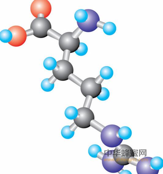 蜂胶的作用与功效之蜂胶的抗细菌作用