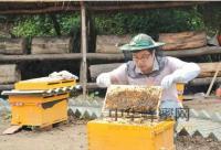 大学毕业回家养蜂创业致富