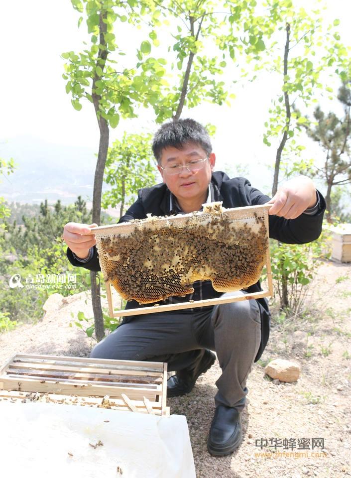 中华蜜蜂 养殖 培训 黎九洲