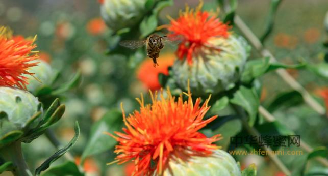 蜂蜜 掺假 鉴别 技术 检测 质量安全 蜂蜜质量 蜂蜜优劣 好蜂蜜 纯蜂蜜