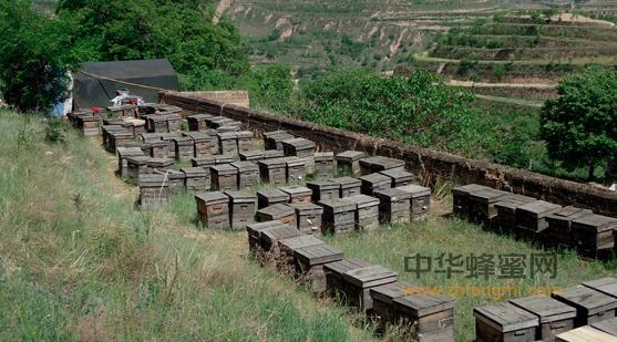 我国蜂产品行业的规模与现状