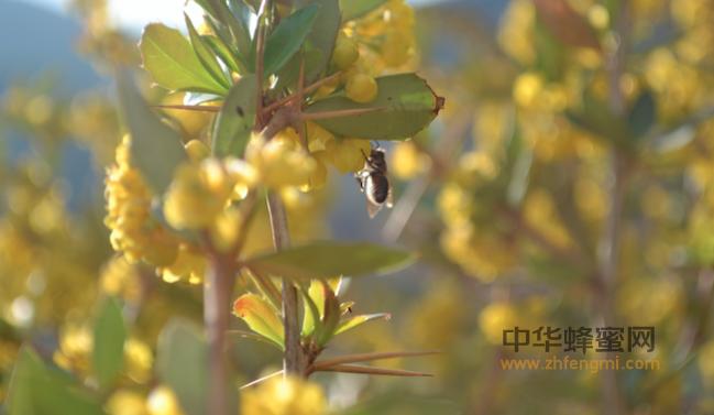 蜂产品 规模 现状 国外 蜂蜜产量 蜂蜜生产国