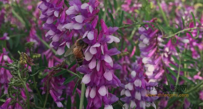 宣威市 养蜂 养蜂技术 养蜂协会