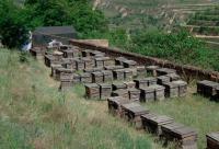 河南省养蜂协会