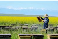 养蜂管理办法