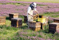 广东省养蜂学会