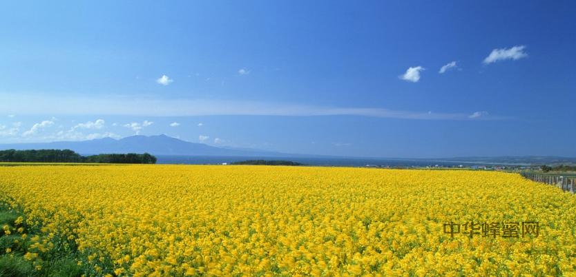巫山县 养蜂人 养蜂 蜜蜂养殖 赶花