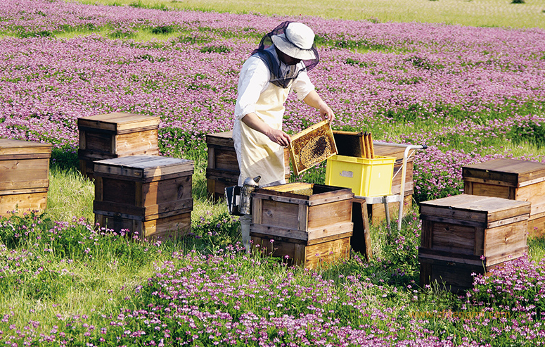 养蜂人 长寿 王养子 养蜂 养蜂技术 跑山 蜂蜜 养蜂故事