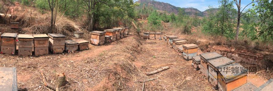 养蜂人 身残志坚 唐建 中蜂飞逃 中蜂养殖 养蜂书籍 养的技术