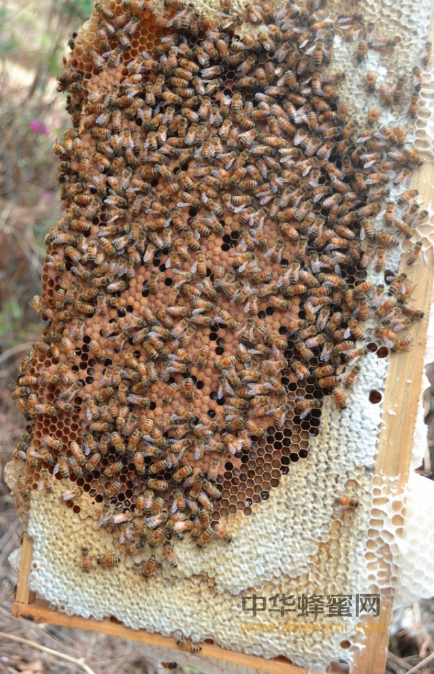 养蜂业 法律 法规 解释 养蜂器具 蜂产品质量 卫生标准