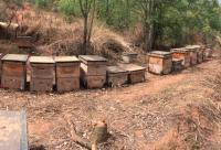农业部关于加快蜜蜂授粉技术推广促进养蜂业持续健康发展的意见