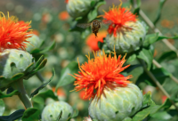 关于尽快建立和推广蜂行业政策性保险的建议