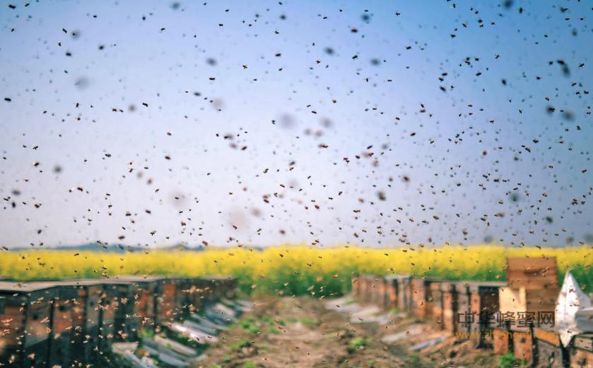 辽宁省 养蜂 养蜂规模 养蜂技术 蜂病 蜂蜜销售