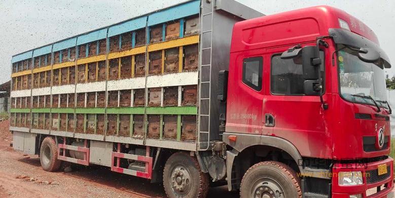 绿色通道 政策 养蜂业 养蜂 养蜂技术 蜜蜂养殖 蜂蜜运输车辆