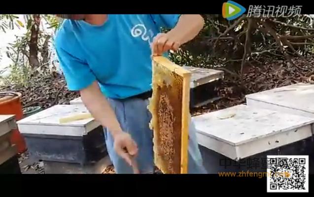 蜂蜜 养蜂视频 采蜜技术 蜜蜂养殖 摇蜜