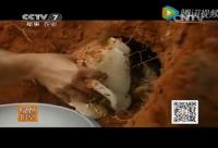 中华蜂蜜网养蜂技术视频之养蜂工具制作和蜂箱制作
