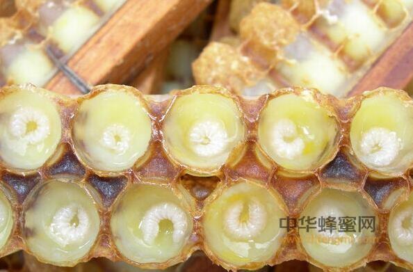 蜂王浆 蜂王浆的作用与功效 抗癌防癌