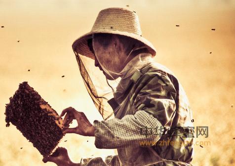 养蜂 养蜂技术 蜂群检查 群势强弱 病虫害 失王