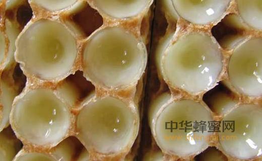 蜂王浆 种类 蜜源植物 蜂种