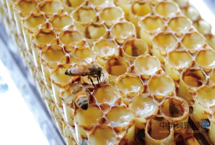 蜂花粉 蜂王浆 异同 区别 蜂产品 花粉 蜜蜂